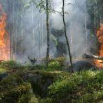 De violents incendies ravagent l'Amazonie
