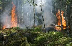 La forêt tropicale amazonienne du Brésil est en train de bruler