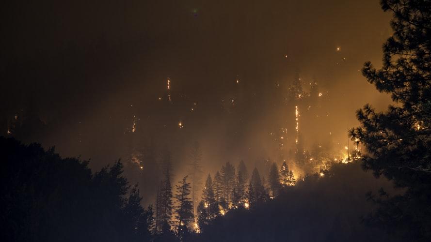Le «poumon vert de la planète» part en fumée