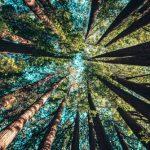 Quatre grands médias français s'associent pour couvrir l'actu environnementale